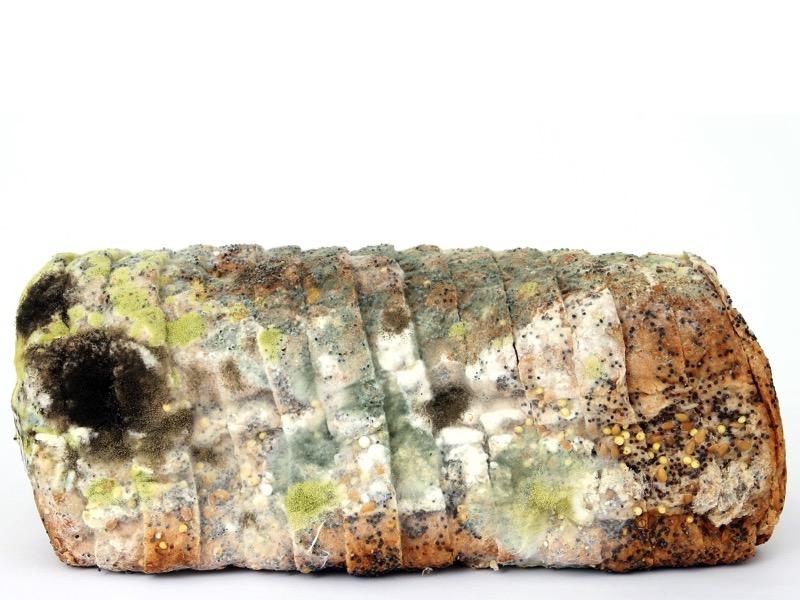 2・黒色真菌症の原因菌とは