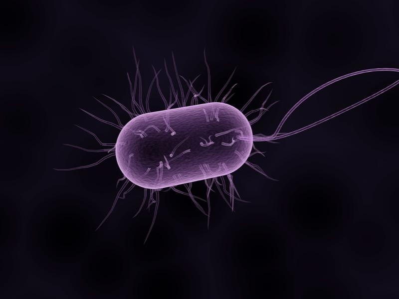 1・黒色真菌症の概要とは
